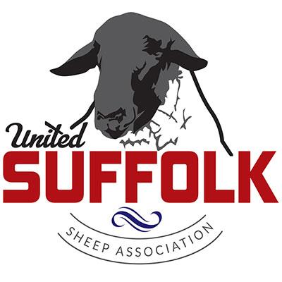 United Suffolk Sheep Association | FIND A BREEDER