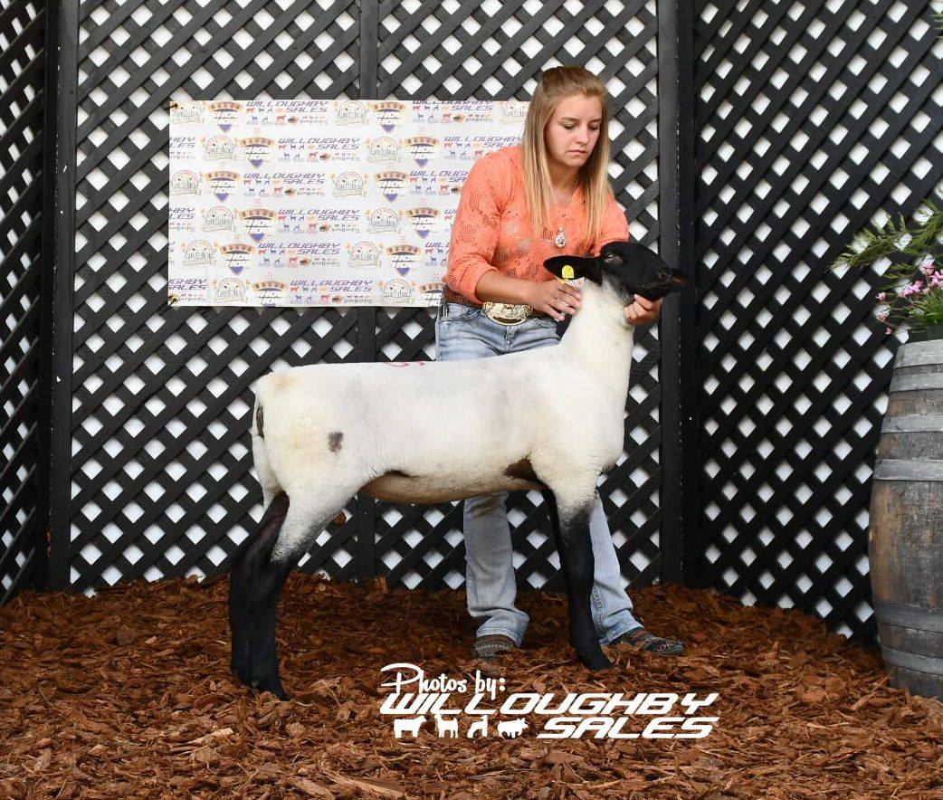 2018 All American Nugget Show & Sale by United Suffolk Sheep