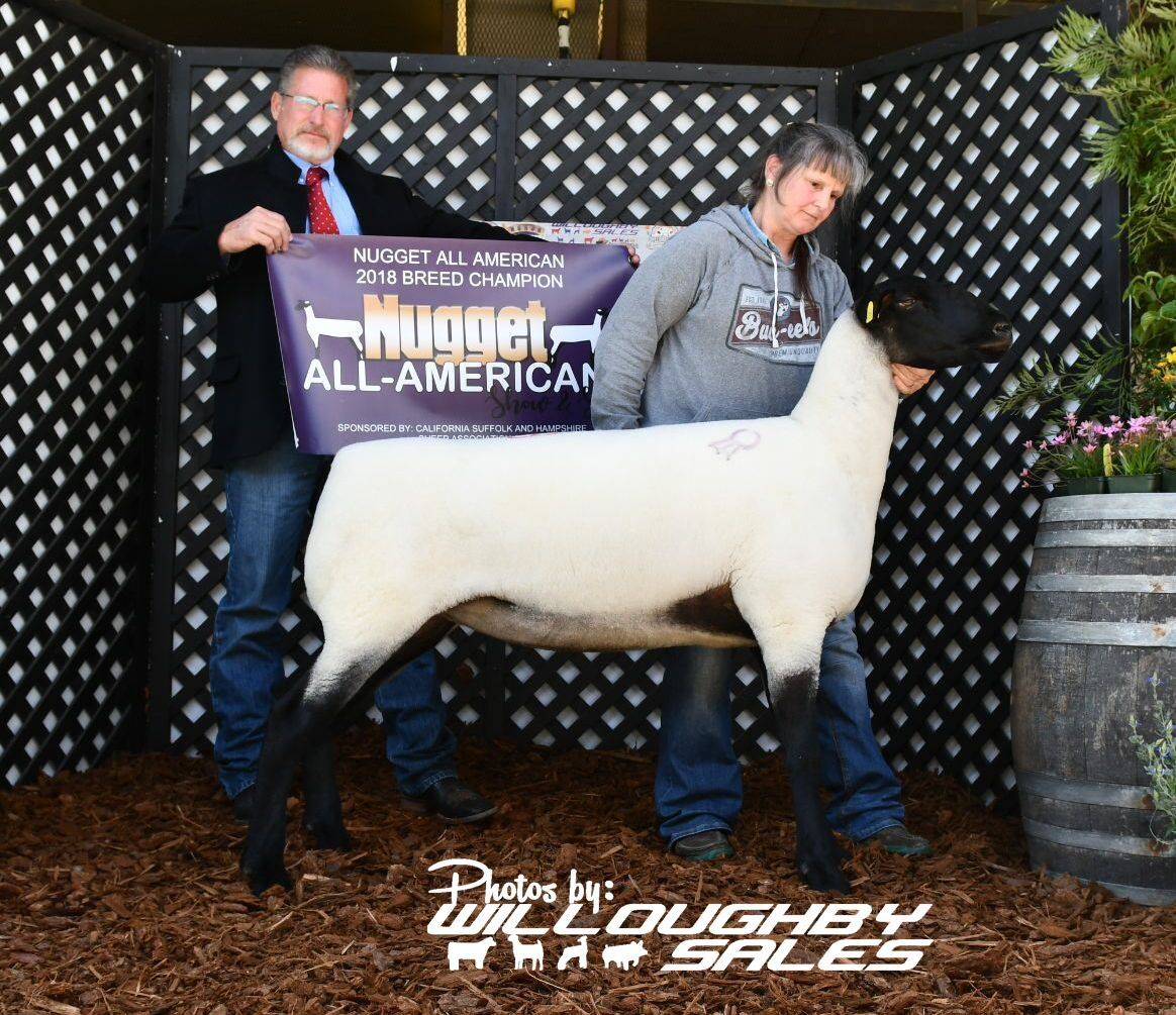2018 All American Nugget Show & Sale by United Suffolk Sheep Association